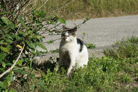 石垣 猫島
